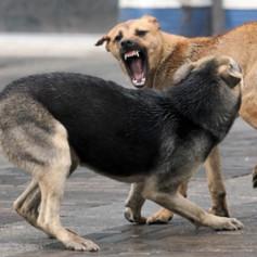 В Смоленской области на детей нападают агрессивные бродячие собаки