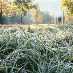 Сегодня ночью в Смоленске будут заморозки