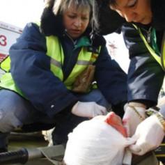 Один погибший, трое госпитализированных. Три ДТП произошли вчера под Смоленском