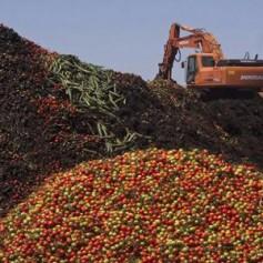 Россельхознадзор уничтожит под Смоленском «санкционные» томаты и персики