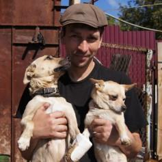 В Смоленске появится приют для собак