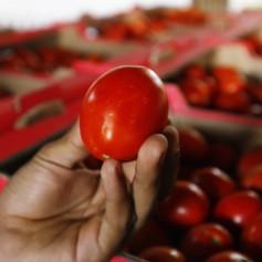 Яблоки и томаты «не прошли» через Смоленск