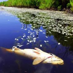 Таинственная гибель рыб зафиксирована на Акатовском озере в Смоленской области