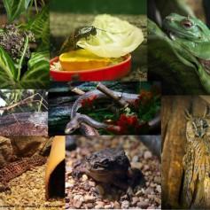Горожанам покажут «Мир невидимок Смоленского зоопарка»