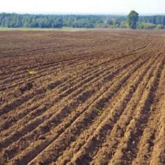В Смоленской области будут изымать неиспользуемые сельскохозяйственные земельные участки