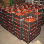 В Смоленскую область не пустили фрукты из Европы
