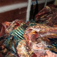 Пять тонн мяса облили зеленкой и вернули хозяину