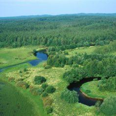 Смоленские леса «оцифруют»