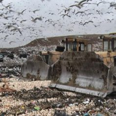 На полигоне в Смоленской области уничтожили санкционные гранаты и грибы