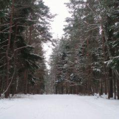 Губернатор Смоленской области предложил проводить в Красном Бору общегородские субботники