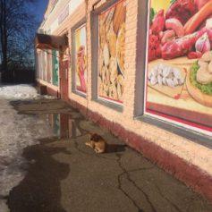 В райцентре Смоленской области начали отлов бездомных собак