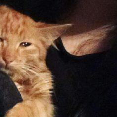 Смолянки выложили в сеть видео с умирающим котенком