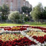 В Смоленске возле «Октября» высадится экодесант