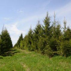Доходы от использования лесов, объектов животного мира и водных ресурсов Смоленской области в первом квартале 2017 года составили почти 66 млн рублей