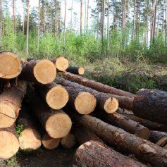 Смоляне незаконно срубили деревья, чтобы построить сарай