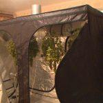 Смолянин организовал в съемной квартире лабораторию по выращиванию конопли