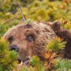 Подробности: как медведи напугали вяземских грибников