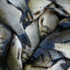 Рыбохозяйственные организации Смоленской области значительно увеличили темпы развития