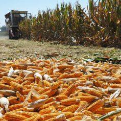 В Смоленской области успешно завершают «битву за урожай»