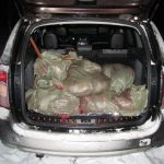 В Смоленской области сотрудники полиции задержали браконьера