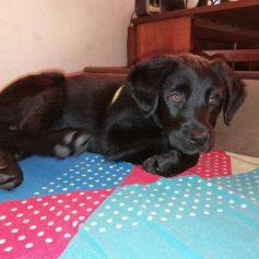 В Смоленске ищут дом для щенка, которого пытались отравить и заколоть вилами