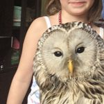 Стала известна судьба совы, которую сбила машина в Смоленске