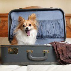 Смолянам рассказали, как правильно путешествовать с животными