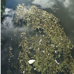 В реке Вязьма гибнет рыба