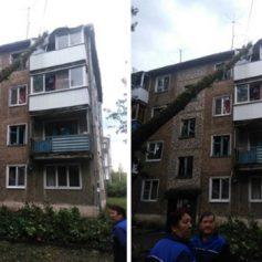 В Смоленске упавшее дерево повредило балкон в четырехэтажном доме