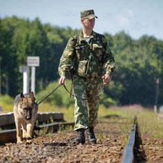 С начала года смоленские пограничники задержали свыше 700 нелегалов