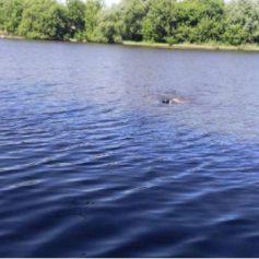 Из Десногорского водохранилища извлекли тело рославльчанина