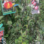 В Смоленской области нарушали законодательство при торговле саженцами