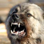 В Смоленской области бешеная собака покусала 11 человек