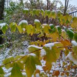 Синоптики прогнозируют самую тёплую за последние 25 лет зиму