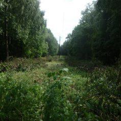 Смоленскэнерго завершило запланированные на 2018 год работы по расчистке просек ЛЭП