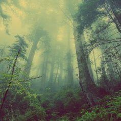 В лесу Шумячского района заблудились супруги