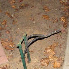 Хулиганы в Рославле уничтожили фонари
