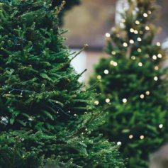 Главную новогоднюю елку Смоленска начнут устанавливать 3 декабря
