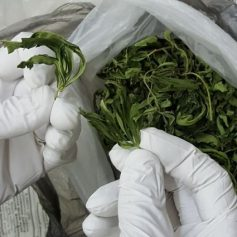 Полиция подозревает смолянина в попытке продать марихуану