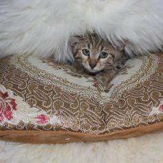 В Смоленске на стерилизацию животных предоставят скидку 30%