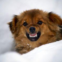 Как наказать хозяина, если покусала собака?
