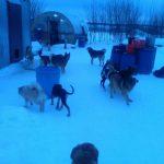 Смоленский приют для животных находится в критическом состоянии