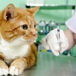 С понедельника в Смоленске начнется бесплатная вакцинация домашних животных