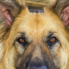 Смолянка рассказала, как собака прокусила руку дедушке на улице