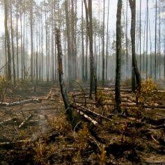 В Руднянском районе произошел серьезный лесной пожар