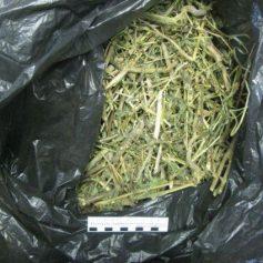 Полкило наркотиков изъяли у жителей Смоленской области