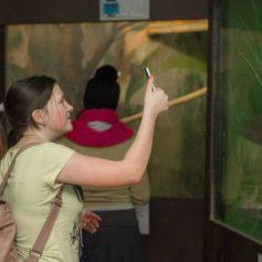 Смоленский зоопарк может переехать в детский биолого-экологический центр