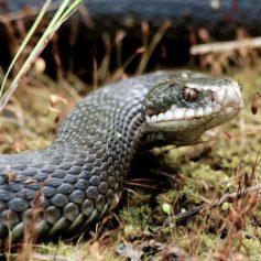 В Смоленской области змеи нападают на людей