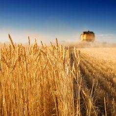 Начинающие фермеры региона приглашаются к участию в конкурсе на получение гранта
