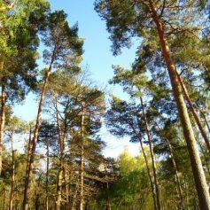 Питомник зеленых насаждений собираются создать в Смоленске